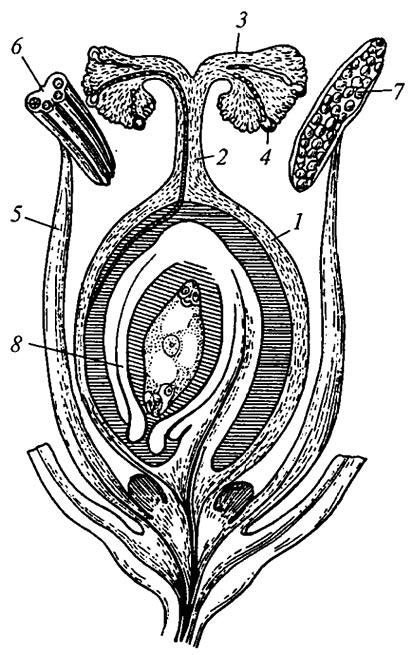 Строение цветка рисунок-схема